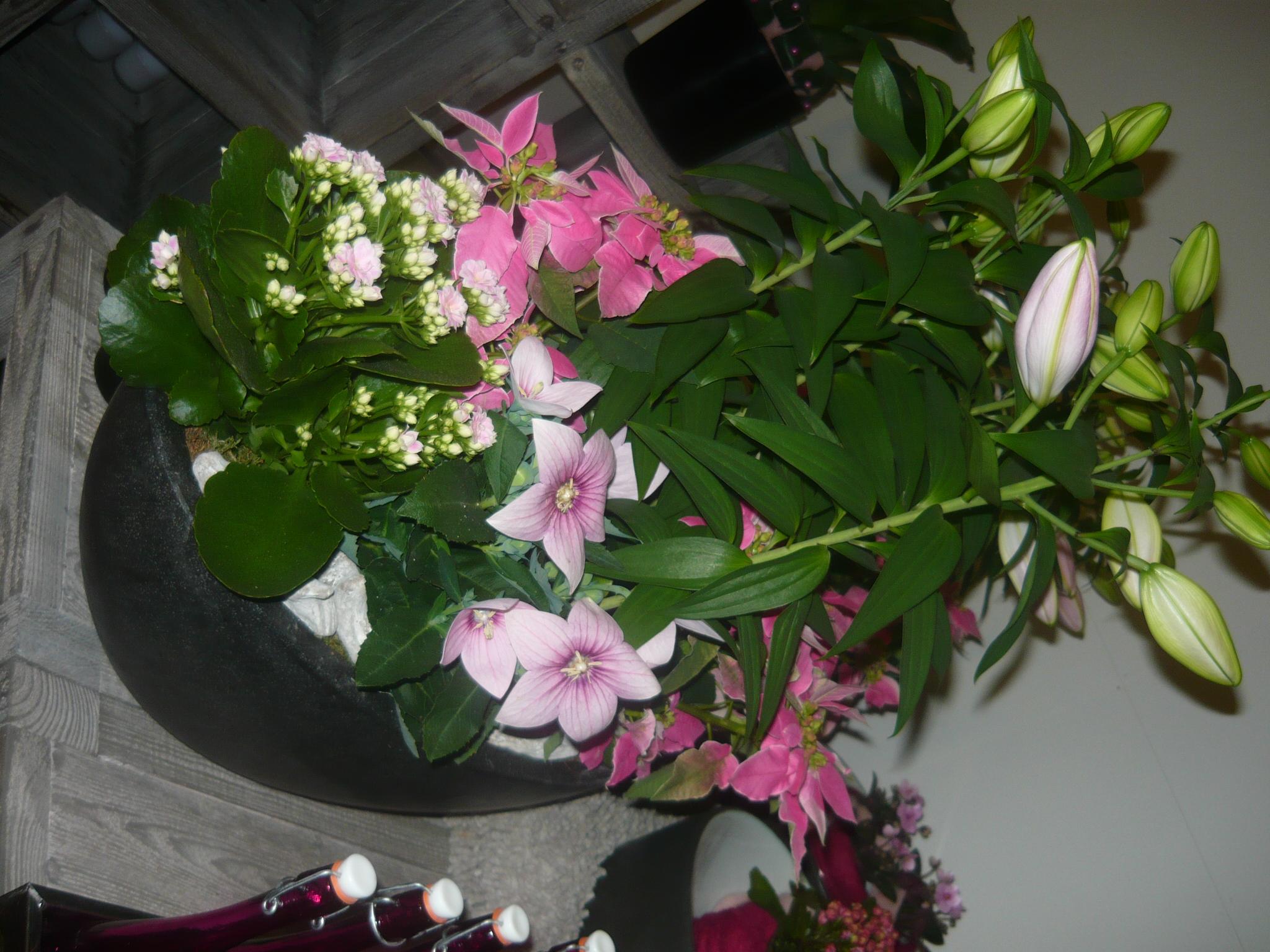 Fleurs d 39 irlande for Magasin de plantes
